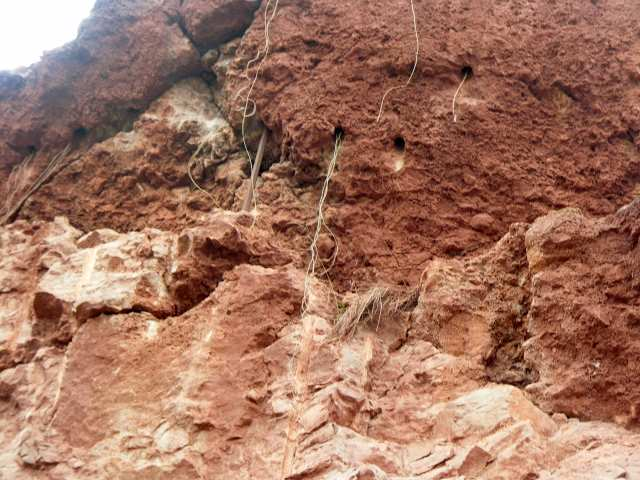 Czerwona Góra, kamieniołom, korzenie roślin
