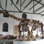 szkielet-dinozaura