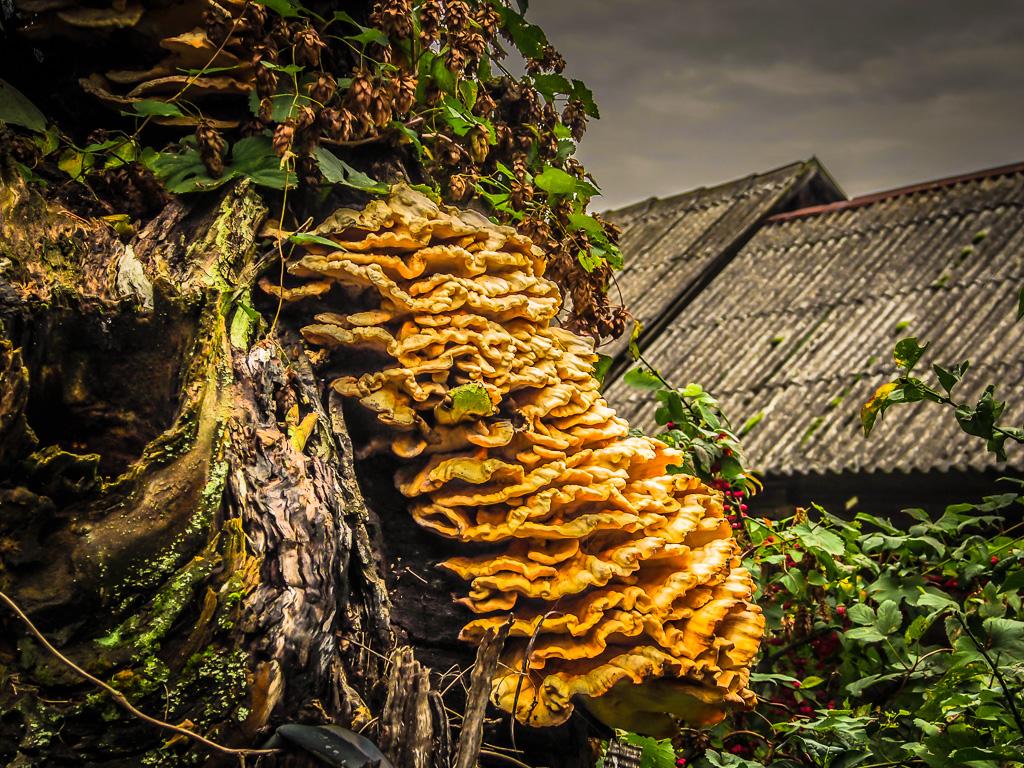 Fotografuję grzyby przeważnie trujące