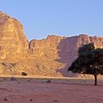Wadi-Rum-drzewo