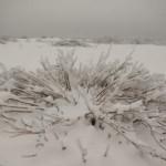 Pustynia-Bledowska-zima-2