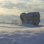 ostaniec-na-sniegu