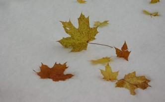 liscie-klonu-snieg