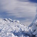 pejzarz-zimowy