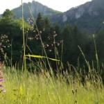 storczyk-Golka-dlugoostrogowa
