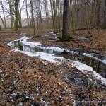 Las Dąbrowa przedwiośnie