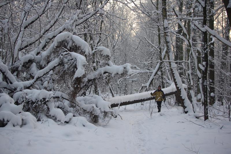 Gliwicka puszcza rezerwat Las Dąbrowa