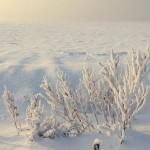 bialo-w-zimie