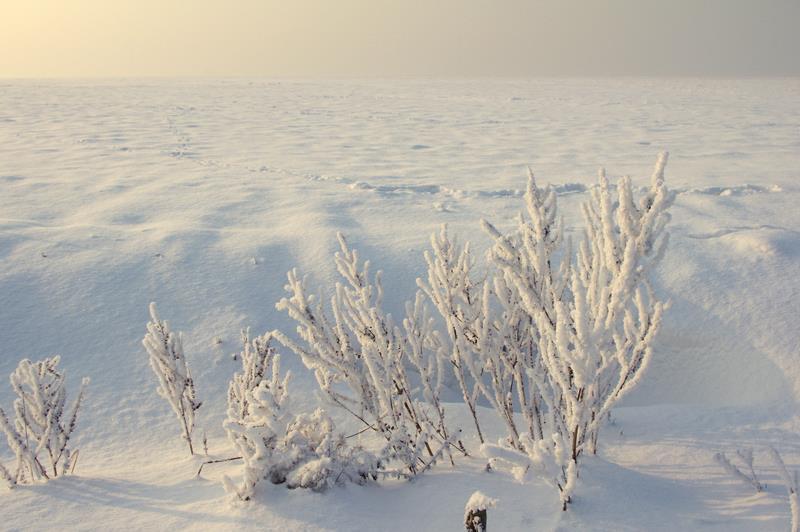 zimowe pustkowia