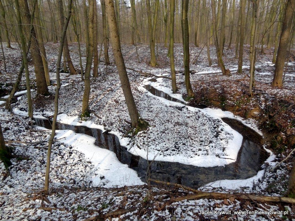 Dzięcioły walą na całego w lesie na wiosnę
