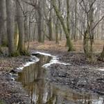 przedwiośnie w Lesie Dąbrowa