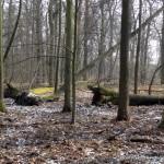 rezerwat Las Dąbrowa