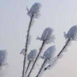 szczec-pospolita-zima