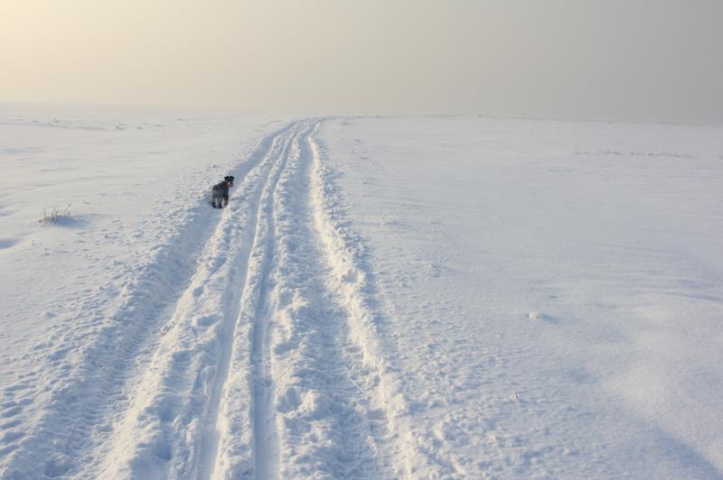 Gliwice, trasy narciarskie