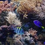 Gdynia-Oceanarium