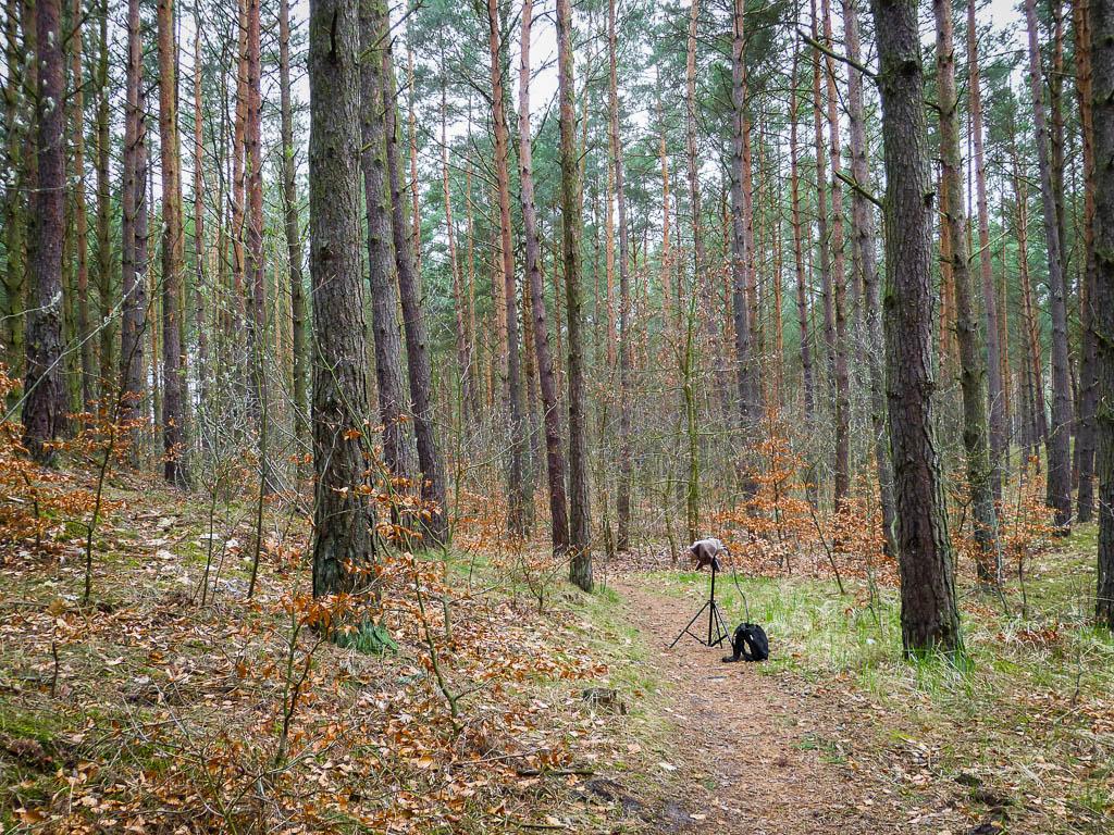 Wiosenne śpiewy ptaków w Mikoszewie