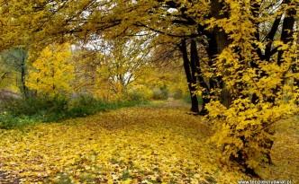 Jesien-idzie-przez-park