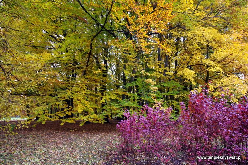 Jesień Park Chrobrego Gliwice