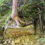 drzewo-rosnace-na-glazie