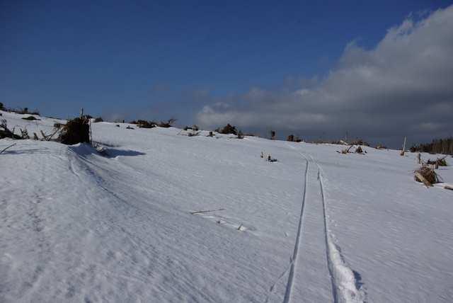 ślady nart, śladowych oczywiście ;-)