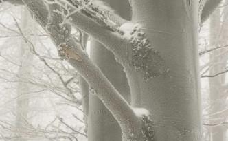 szadz-na-drzewie