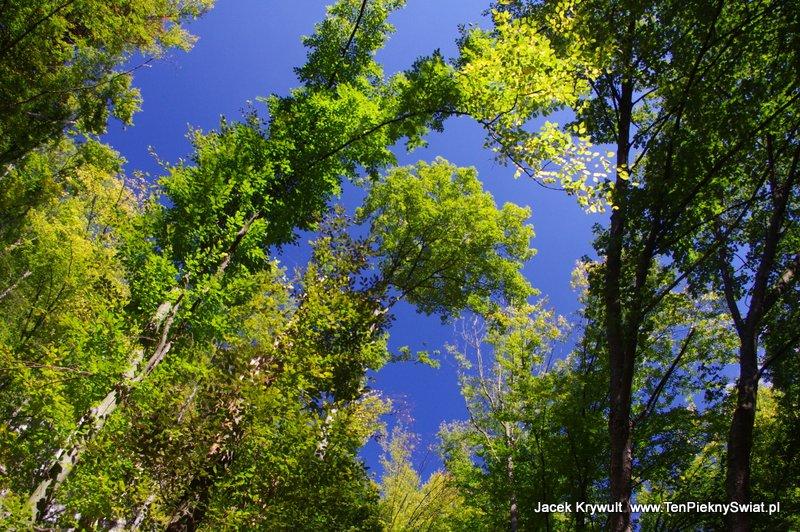 Zielone drzewa,  Ojców