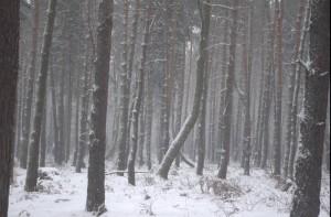 Okolice Gliwic, Rachowice, Bytom, Zabrze,Tarnowskie Gory
