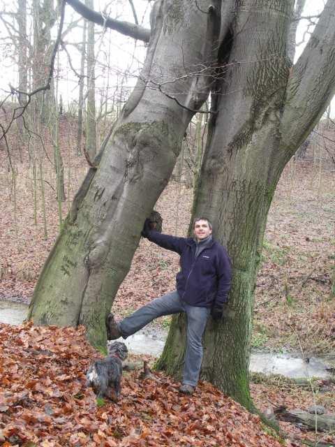 Osobliwości przyrody. Zrośnięte 2 drzewa buki