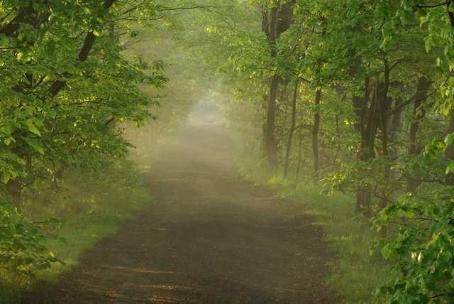 Rezerwat Łężczok, aleja pomiędzy stawami