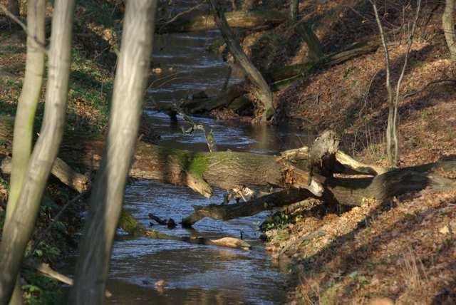 Łężczok, urokliwe leśne strumyki