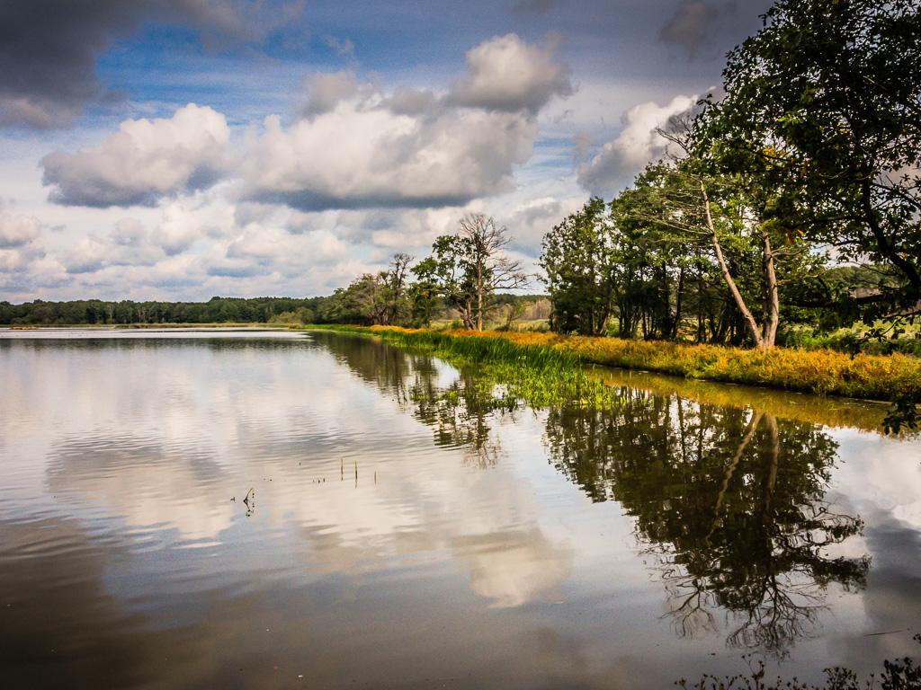 Deszcz żołędzi i jesienne odgłosy ptactwa w rezerwacie Łężczok