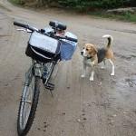 wdzydzki-park-krajobrazowy-rower-pies