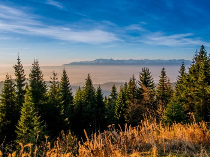 Panorama na Tatry z Turbacza