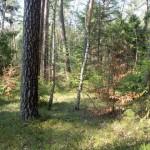 Roztocze-las