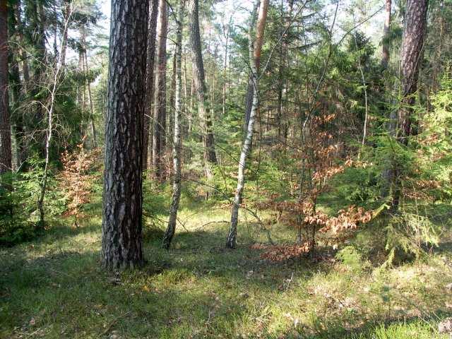 Roztocze lasy