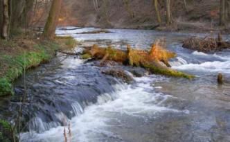 Suziec-rezerwat-nad-Tanwia