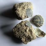 muszle-skamienialosci