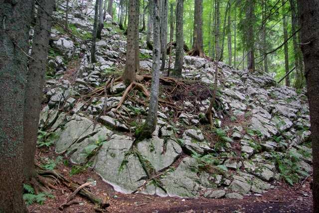 alpy julijskie, las mieszany