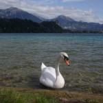 jezioro-bled