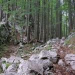 las-w-alpach-julijskich