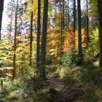 szlak-w-lesie