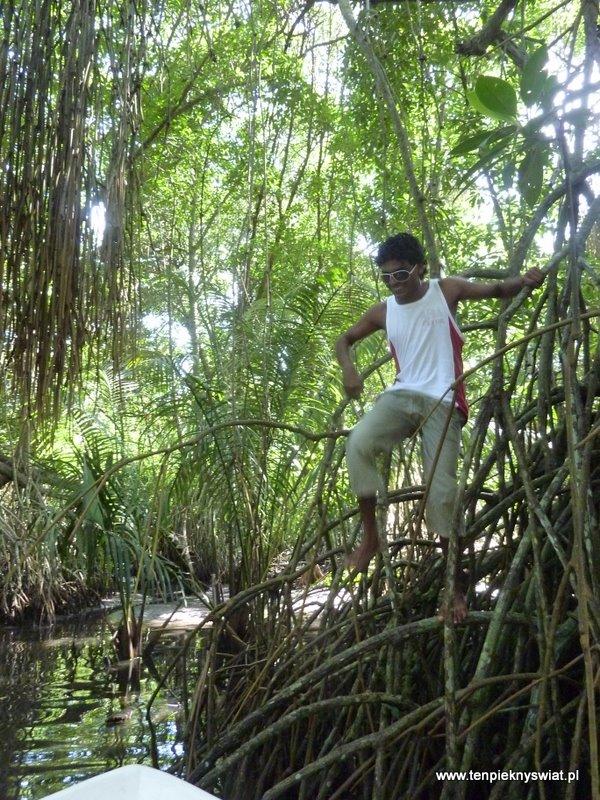 lasy namorzynowe,  Nadeen, przewodnik w Sri Lanka