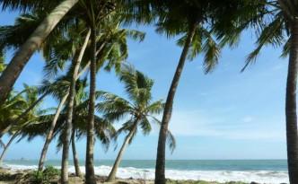 gaj-palmowy-nad-oceanem