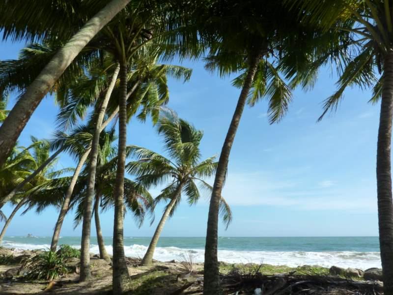 plaża i palmy, Sri Lanka, Cejlon