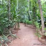 hodowla-przypraw-Sri-Lanka