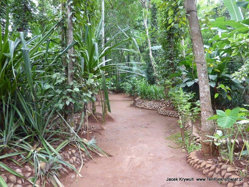 uprawa przypraw Sri Lanka