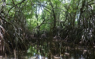 lasy-namorzynowe
