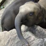 slon-prosi-o-jedzenie