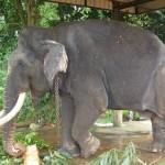 slon-w-niewoli