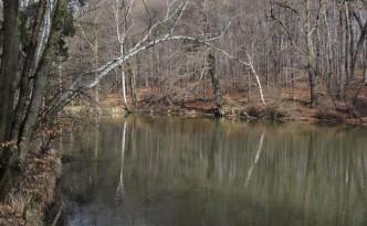 Staw leśny, miejsce rozmnażania płazów